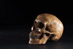 Skull on dark Stock Photos