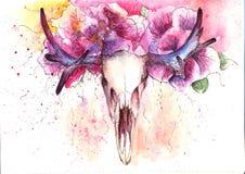 Skull deer royalty free stock images