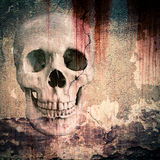 Skull. Depicted in plastered walls royalty free stock image