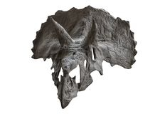 The skull of dinosaur triceratops on white , isolated royalty free stock photo