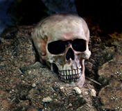 Skull in the Dirt Stock Photo