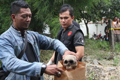 Skull discovery. Police found a skull on a vacant lot in Solo, Central Java, Indonesia Royalty Free Stock Image