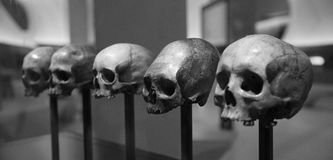 Skull display. Five humanoid skulls on display Royalty Free Stock Images