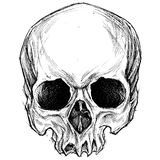 Skull drawing Royalty Free Stock Photography