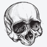 Skull Drawing Royalty Free Stock Photos