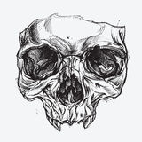 Skull Drawing. Vector for use stock illustration