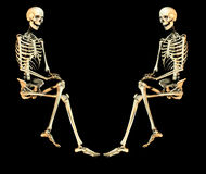 Skull Duo 2. This is a duo of skeletons in a  pose Stock Photos