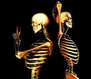 Skull Duo. This is a duo of skeletons in a  pose Royalty Free Stock Photos
