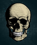 Skull in engraved style Stock Photography