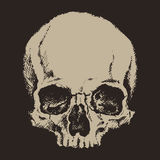 Skull. engraving style. vector illustration. Stock Image