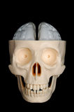 Skull with Exposed Brain. A funny-looking plastic skull, with exposed brain, on a black background royalty free stock photo