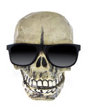 Skull Royalty Free Stock Images