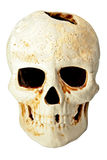 Skull in fas Royalty Free Stock Images