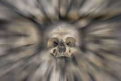 Skull - fear and trembling Stock Photos