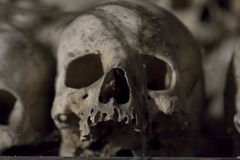 Skull - fear and trembling Stock Images
