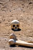 Skull & Femur Stock Photography