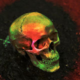 Skull filled with color. Royalty Free Stock Images