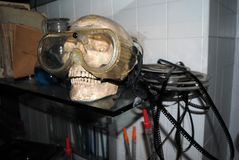 Skull in a film laboratory. With a mask and colls of celluloid Royalty Free Stock Photos