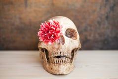 Skull Flower in the eye. Stock Photo