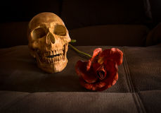 Skull and flower Stock Photography