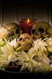 Skull and flower Stock Images