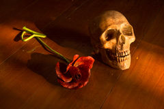 skull and flower Royalty Free Stock Image