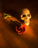 Skull and flower Royalty Free Stock Photos