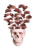 Skull with flying books stock photo
