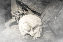 Skull in the fog Royalty Free Stock Image
