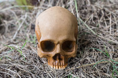 Skull in the forest Stock Photos
