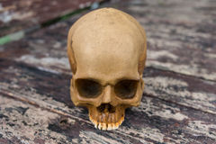 Skull in the forest Royalty Free Stock Images