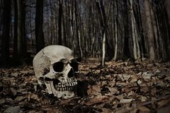 Skull in forest Stock Photography
