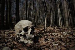 Skull in forest. Horror skull in a dark forrest Stock Photography