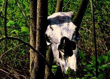 Skull. Forest. Nature. Phone Royalty Free Stock Photography