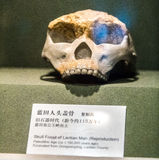 Skull fossil of lantian man Stock Photography