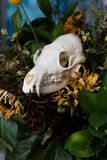 Skull fox in a bouquet of flowers wilted sunflower bouquet. Stock Photos