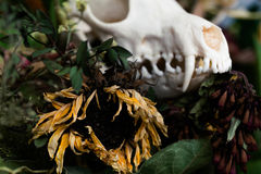 Skull fox in a bouquet of flowers wilted sunflower bouquet. Royalty Free Stock Photos