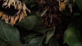 Skull fox in a bouquet of flowers wilted sunflower bouquet. Flowers on Halloween stock footage