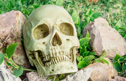 Skull in the garden Royalty Free Stock Images