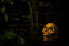 Skull in garden Royalty Free Stock Photos