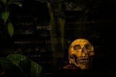 Skull in garden Stock Photography