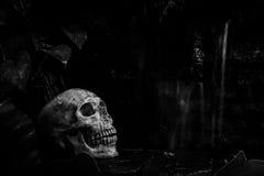 Skull in garden Stock Images