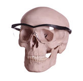 Skull with glasses royalty free stock image