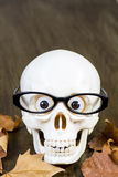 Skull with glasses Royalty Free Stock Photo