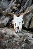 Skull of a goat on a Rock Royalty Free Stock Images