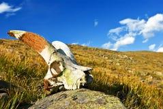 Skull in the grass. Old skull in the grass stock photo