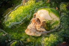 Skull on green algae Royalty Free Stock Photos