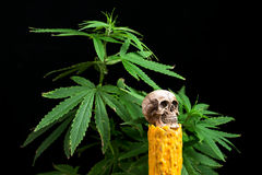 Skull and Green Cannabis Leaf on Black Background Stock Photo