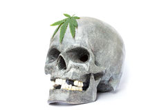 Skull and Green Cannabis Leaf Stock Image