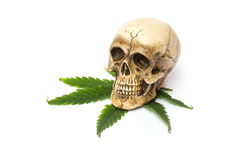 Skull and Green Cannabis Leaf Royalty Free Stock Photography